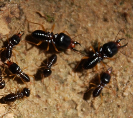 Termite Control Darlington Point, Pre-Purchase Pest Inspection Riverina, Pest Control Griffith